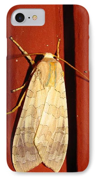 Sycamore Tussock Moth IPhone Case