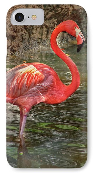 IPhone Case featuring the photograph Symbol Of Florida by Hanny Heim