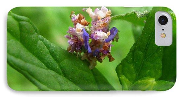 Synchlora Aerata Caterpillar IPhone Case