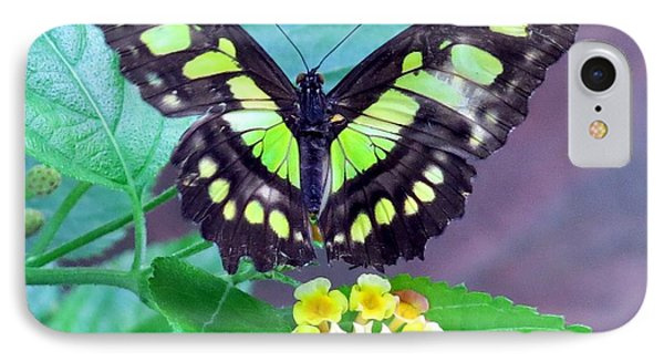 Tailed Jay Visits Lantana IPhone Case by Betty Buller Whitehead