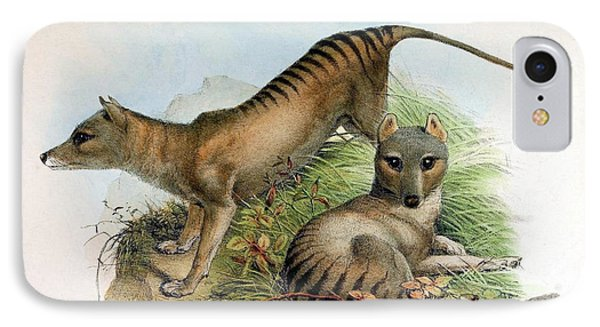 Tasmanian Tiger, Extinct Species IPhone Case by Biodiversity Heritage Library