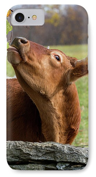 IPhone Case featuring the photograph Tasty by Bill Wakeley