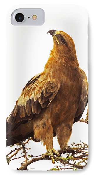Tawny Eagle IPhone Case by Patrick Kain