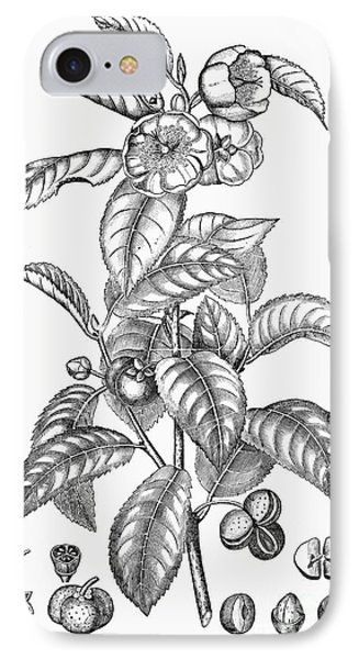 Tea Plant, 19th Century Phone Case by Granger