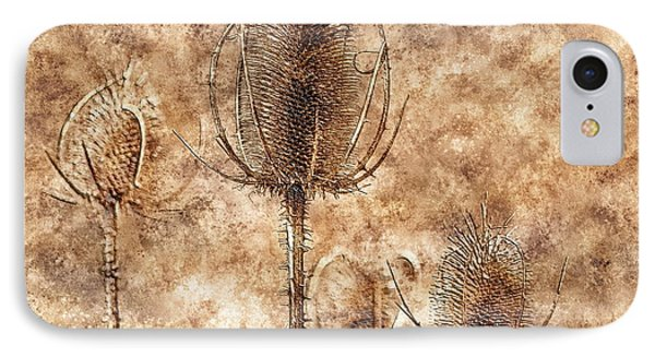 IPhone Case featuring the photograph Teasel Heads  by Dariusz Gudowicz