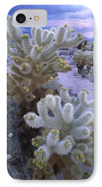 Teddy Bear Cholla In Joshua Tree Np IPhone Case by Tim Fitzharris