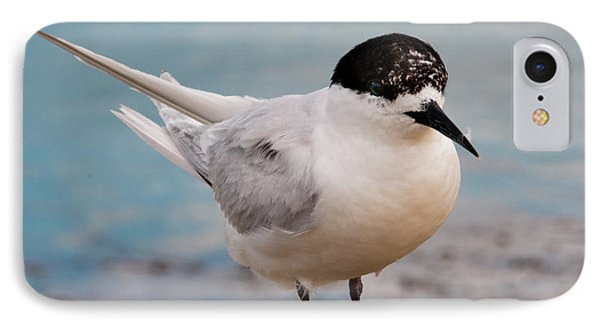 IPhone 7 Case featuring the photograph Tern 1 by Werner Padarin