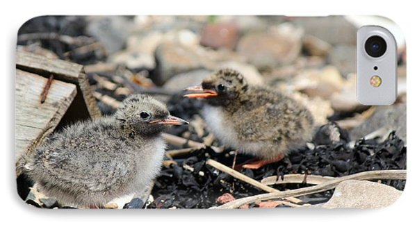 IPhone Case featuring the photograph Tern Chicks by David Grant