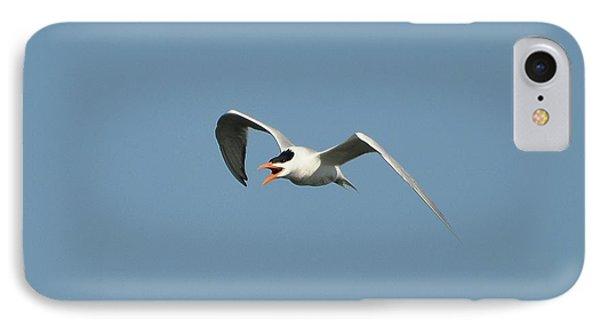 Tern Flight 02 Phone Case by Al Powell Photography USA