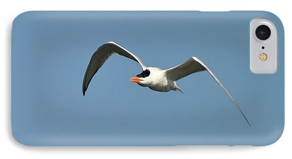 Tern Flight Phone Case by Al Powell Photography USA