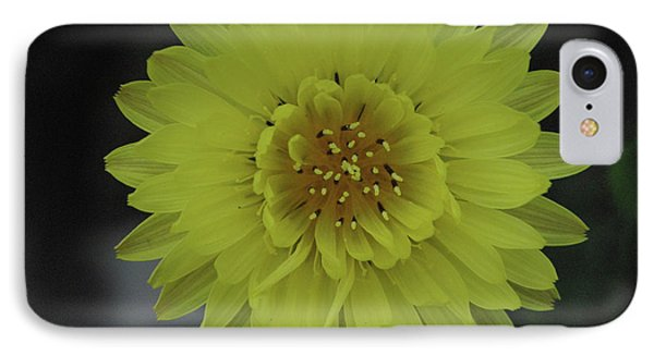 Texas Dandelion IPhone Case by Robyn Stacey