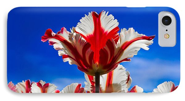Texas Flame Parrot Tulip IPhone Case by John Roberts
