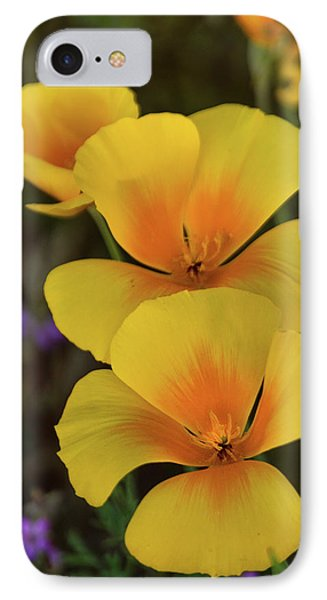 IPhone Case featuring the photograph That Golden Spring Glow  by Saija Lehtonen