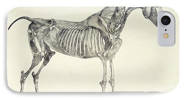 The Anatomy Of The Horse IPhone Case
