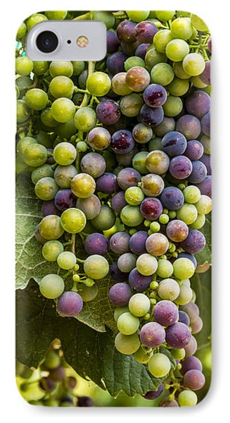 The Art Of Wine Grapes IPhone Case by Teri Virbickis