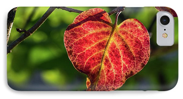 IPhone Case featuring the photograph The Autumn Heart by Bill Pevlor