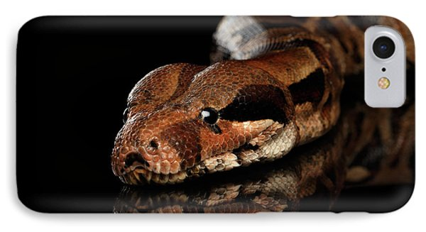 Boa Constrictor iPhone 7 Case - The Boa Constrictors, Isolated On Black Background by Sergey Taran