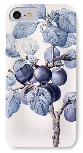 The Branch Of A Plum Tree IPhone Case by Pierre Joseph Redoute