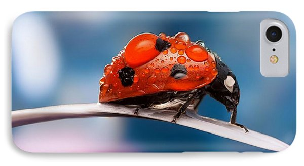The Bug IPhone Case by Thomas M Pikolin