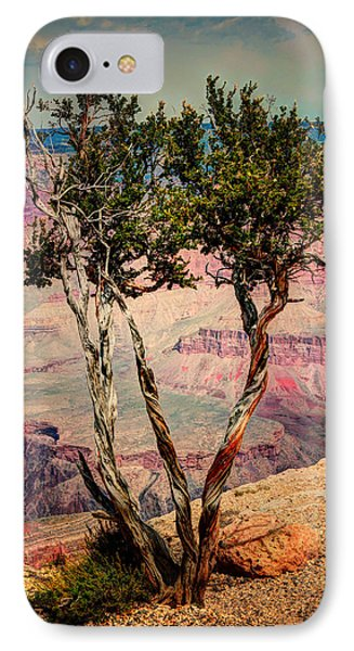 IPhone Case featuring the photograph The Canyon Tree by Tom Prendergast