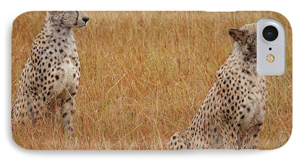 The Cheetahs IPhone Case by Nichola Denny