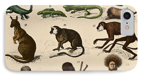 The Descent Of Man, Ernst Haeckel, 1871 IPhone Case