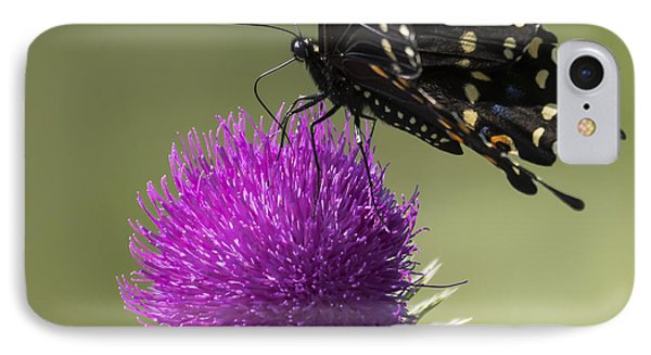 The Eastern Black Swallowtail  IPhone Case