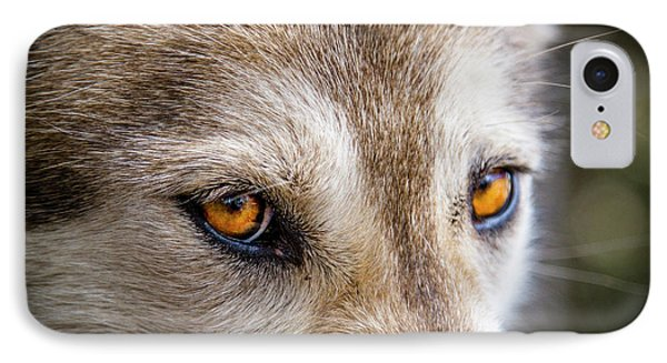 IPhone Case featuring the photograph The Eyes Of A Great Grey Wolf by Teri Virbickis
