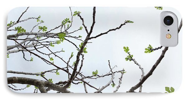 The Fig Tree Budding IPhone Case