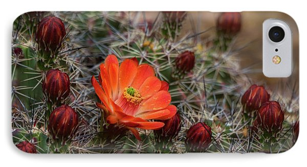 IPhone Case featuring the photograph The First Bloom  by Saija Lehtonen