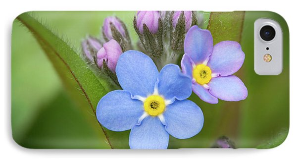 IPhone Case featuring the photograph The First Blossom Of The Forget Me Not by William Lee