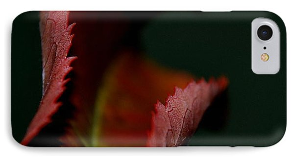 IPhone Case featuring the photograph The First Day Of Fall by Marija Djedovic