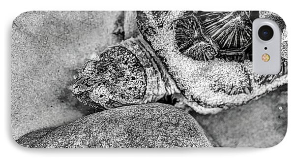 The Florida Snapping Turtle IPhone Case