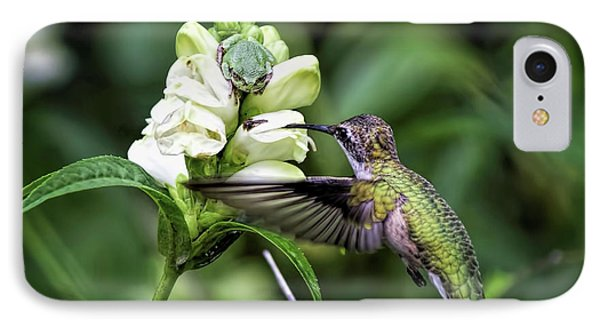The Frog And The Hummingbird IPhone Case by Ron Grafe