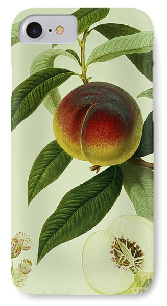 The Galande Peach IPhone 7 Case