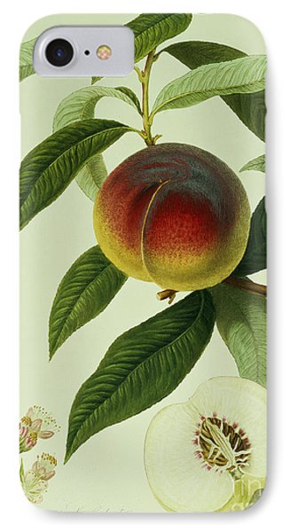 The Galande Peach IPhone Case by William Hooker