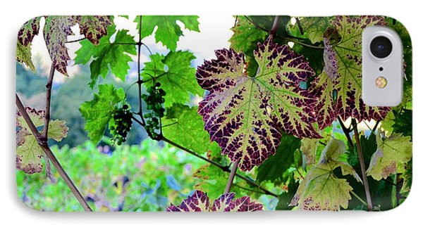 IPhone Case featuring the photograph The Grape Vine by Corinne Rhode