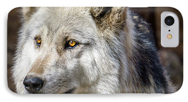 IPhone Case featuring the photograph The Gray Wolf by Teri Virbickis