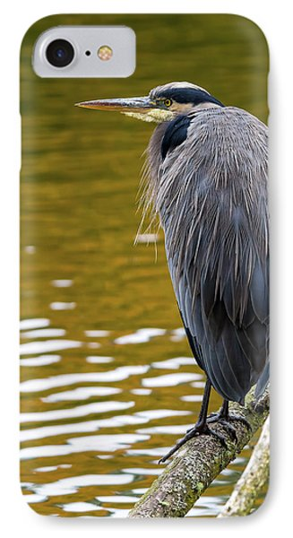 The Great Blue Heron Perched On A Tree Branch Phone Case by David Gn