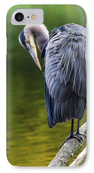 The Great Blue Heron Perched On A Tree Branch Preening Phone Case by David Gn