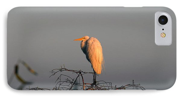 The Great Egret  Phone Case by David Lee Thompson