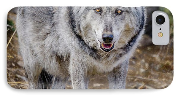 IPhone Case featuring the photograph The Great Gray Wolf by Teri Virbickis