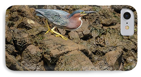 The Green Heron IPhone Case by Jerry Cahill