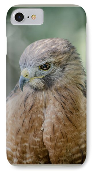 The Hawk IPhone Case by David Collins