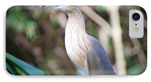 The Heron IPhone Case by Judy Kay