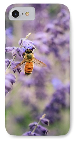 The Honey Bee And The Lavender IPhone Case