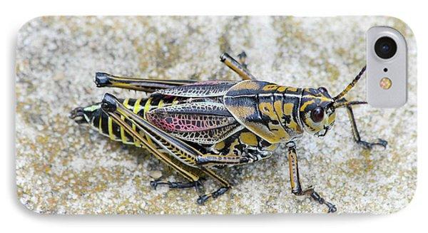 The Hopper Grasshopper Art IPhone Case by Reid Callaway
