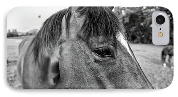 the Horses of Blue Ridge 1 IPhone Case by Blake Yeager