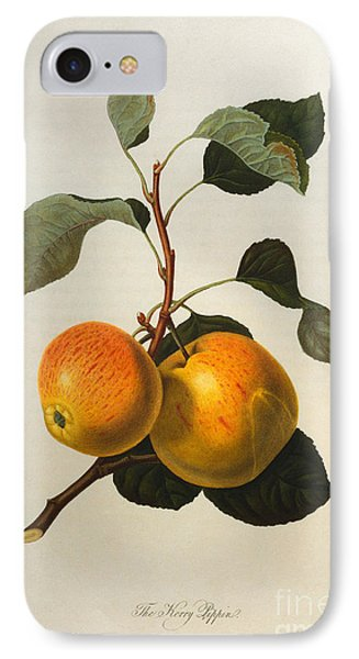The Kerry Pippin IPhone Case by William Hooker