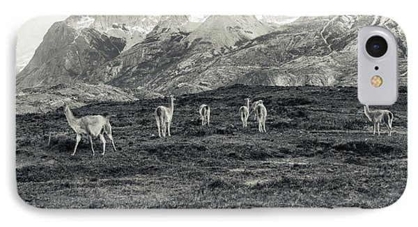 IPhone Case featuring the photograph The Lamas by Andrew Matwijec